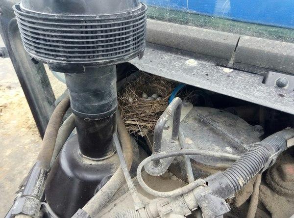 Гнездо в тракторе Гнездо, Птицы, Трактор, Трясогузка
