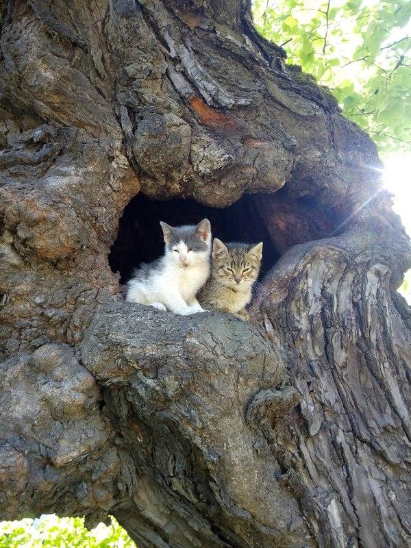 Весна. Коты не только прилетели, но и вьют гнёзда в дуплах.