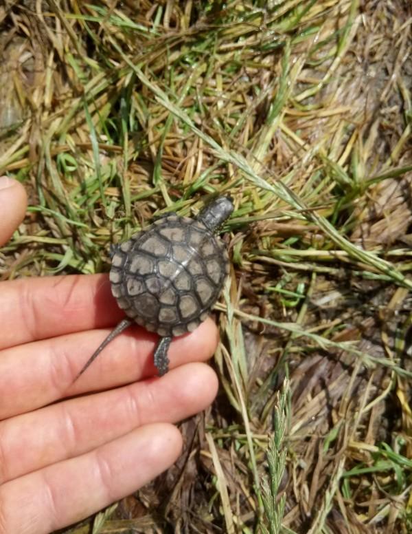 Свобода пост, продолжение, черепаха, маленькая, Спасение, длиннопост