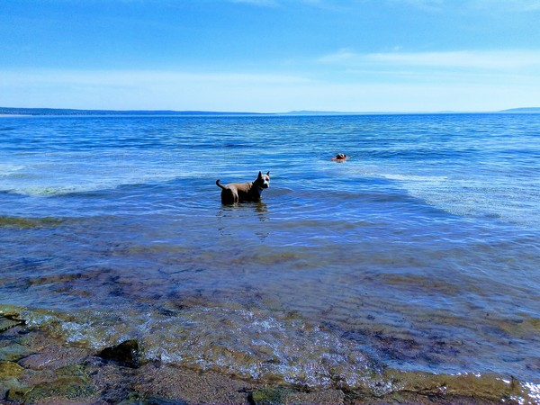 Отдых на воде Собака, лучший друг, амстафф, собака компаньон