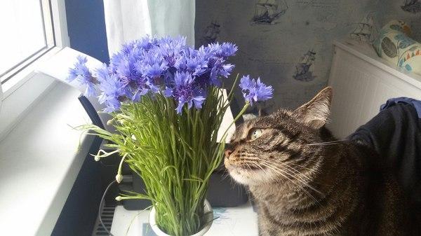 Когда невозможно быть леди. Домашние животные, Кошки и котята, Кот, Бизнесмен, Смешное, Цветы, Лето