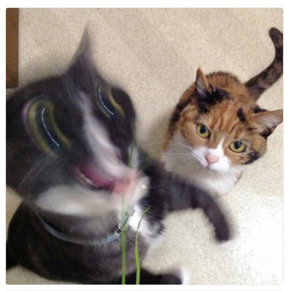 Когда твой друг экстраверт Экстраверт, Друг, Кот, Фотография