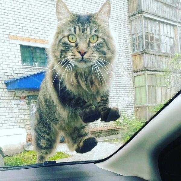 Кошка не думала что в машине кто-то есть.