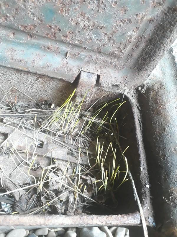 """Моя """"замкнутая экосистема"""". трава, косилка, длиннопост"""