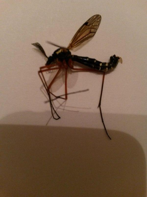 Комар, все комарам комар Огромный комар, Бей комара