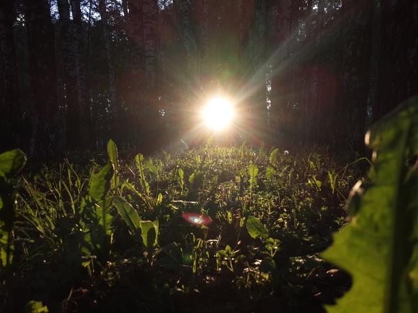 Лето Солнце, Трава, Природа