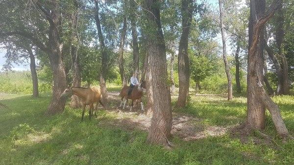 Лошадки любят прогулки кони, лошадь, наблюдение, прогулка, длиннопост