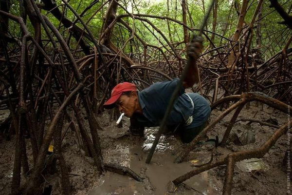 Ловец крабов из Бразилии Бразилия, ловец, Краб, амазонка, Интересное, длиннопост