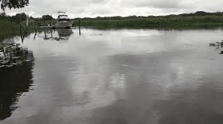 Перед купанием в незнакомой реке проверь ее флорида, США, Река, Сент-Джонс, гифка