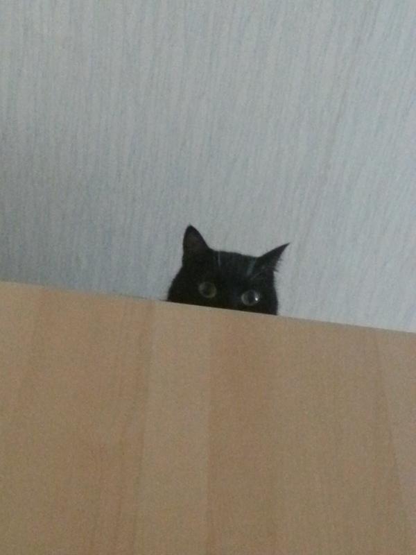 Я наблюдаю за тобой, человек!