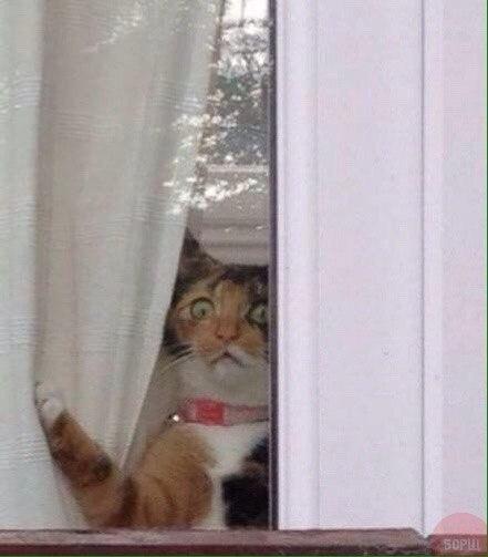 Вискас - зло. кот, Хозяин болен, я сильный, вечерний звон, вискас