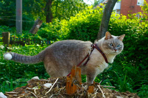 Кот Джаз кот, Кот Джаз, домашние животные, милота, Няша, прогулка, Природа