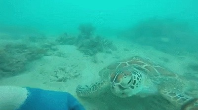 Наблюдая 3 часа за морской черепахой, дайвер обрел ее доверие и смог подружиться