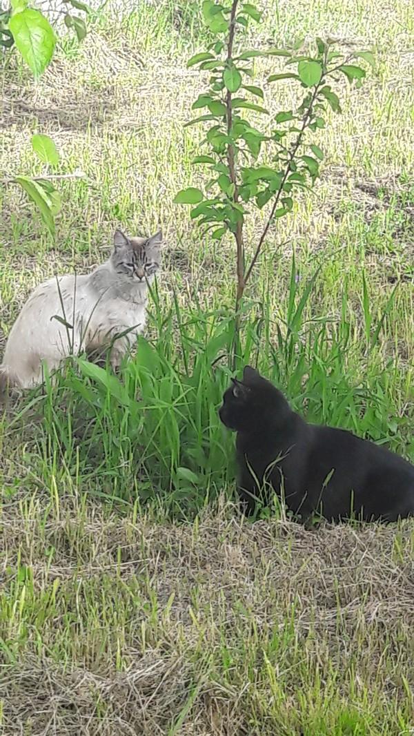 Любовь Кот, Безответная любовь, Длиннопост