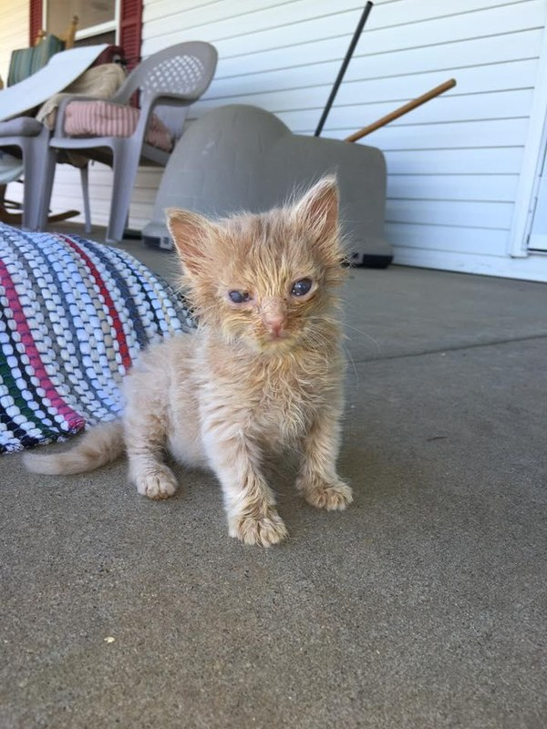 Stray cat had kittens what to do