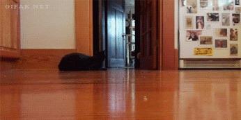 Скоростной кот Кот, Гифка, Такси 3, ВКонтакте