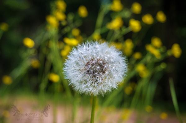 Летняя прогулка featheratlas, Природа, пейзаж, лето, длиннопост