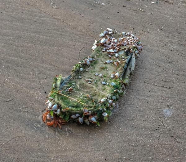 Целая колония морской жизни на старом тапке