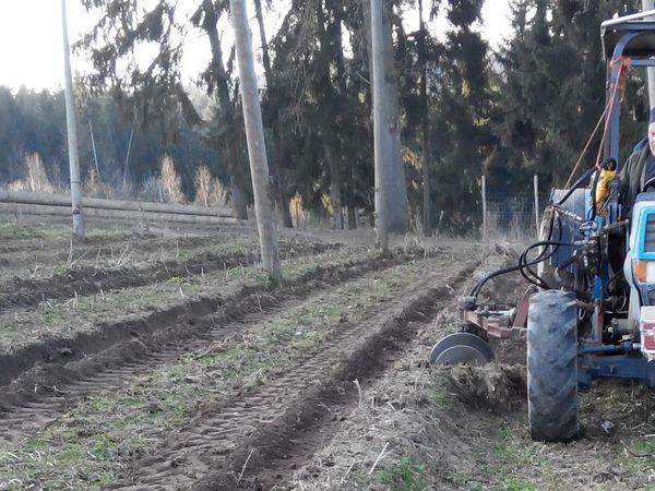 Хмелеводство - как это делается в Германии. Часть 2. Хмель, Хмелеводство, Германия, Растениеводство, Сельское хозяйство, Длиннопост