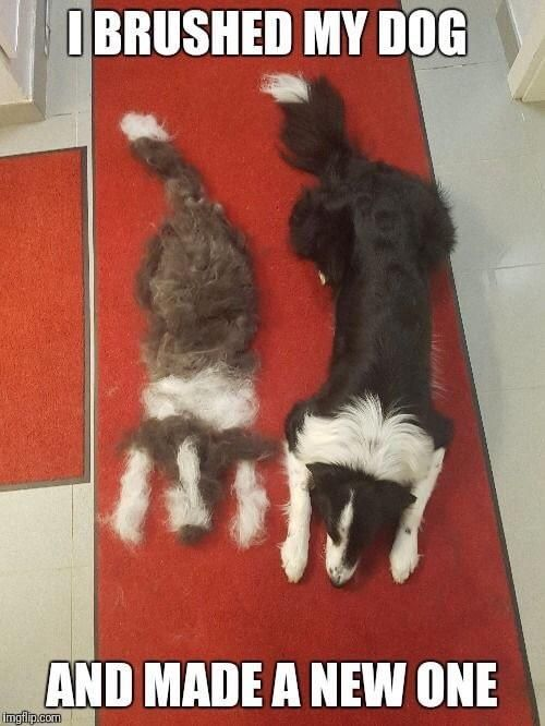 Была одна собака, стало две. Собака, Животные, Шерсть, Вычесали