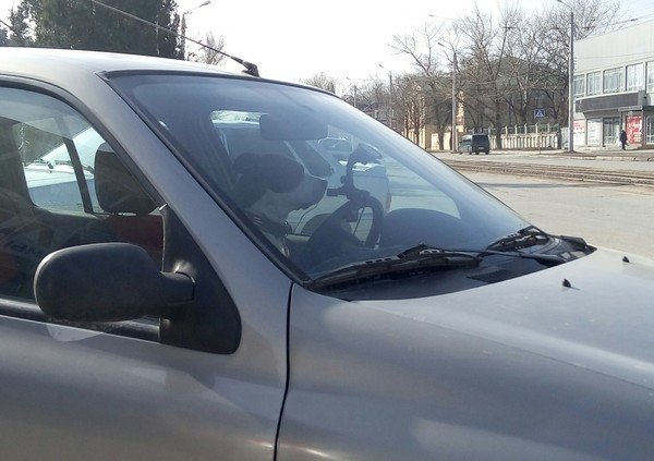 Водитель - пес. Собака, Водитель