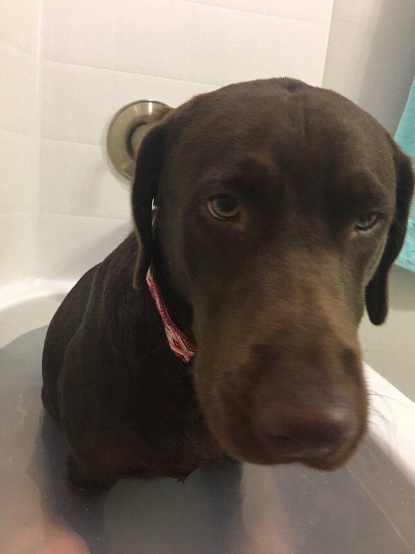 """""""Я просто пыталась насладиться ванной"""" Собака, Ванна, Дратути, Длиннопост"""
