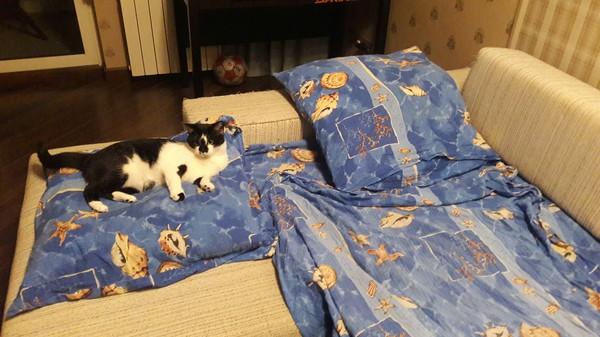 Любимая кошка сын, парень и девушка, что за?!, кот