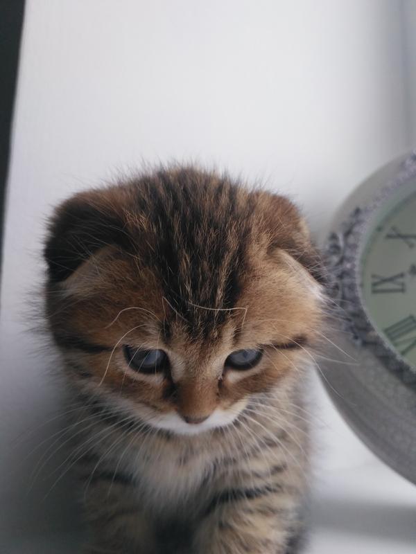 Имени у котика ещё нет. Есть предложения? кот, фотография, Xiaomi, Xiaomi redmi 3s, телефон, хочу критики, горизонт завален, Лига фотографов