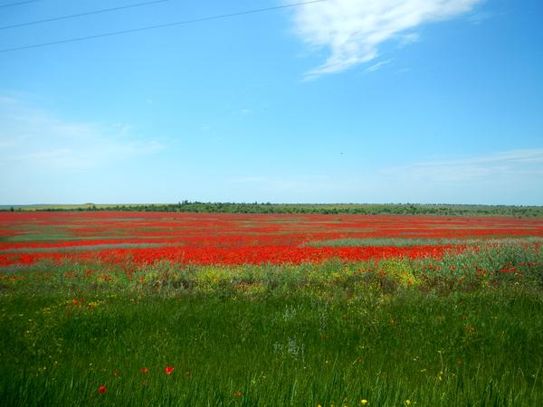 Дышит лето ветерком... Лето, Крым, Тепло, Длиннопост
