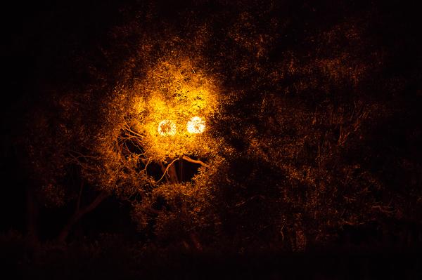 Ночная прогулка фотография, ночь, парк, крипота, парейдолия