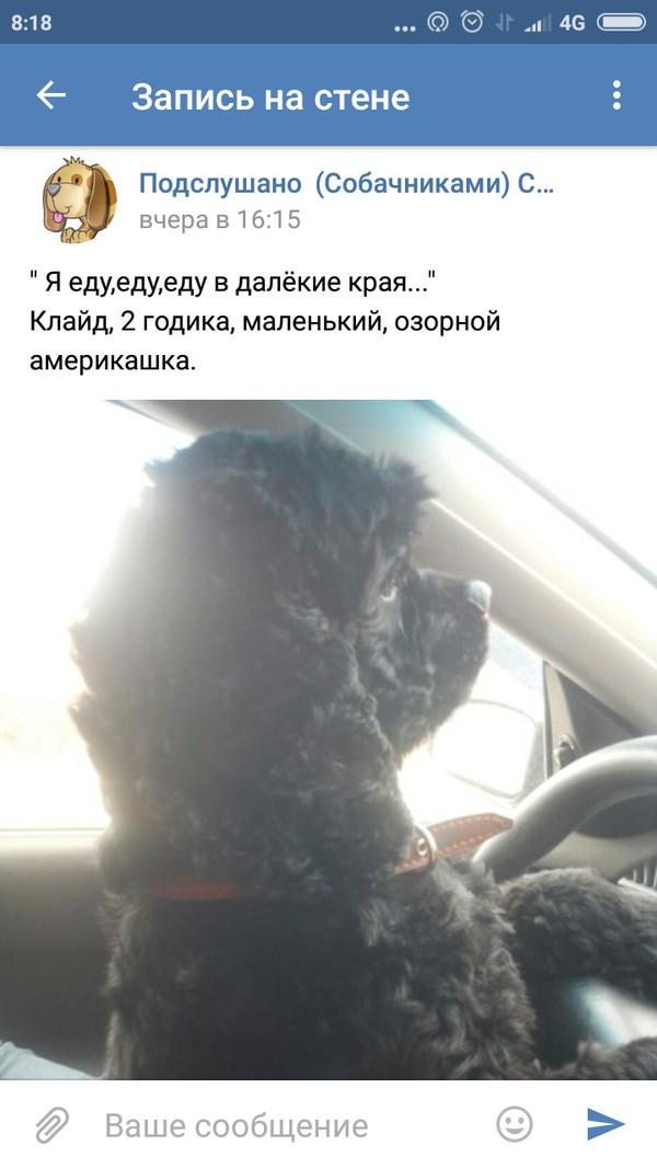 Собака друг человека! Собака, Машина