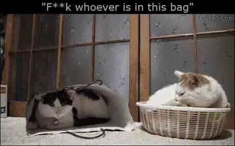 Коты они такие