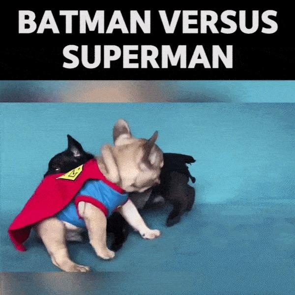 Бэтмен против Супермена... зооверсия.