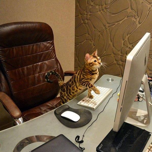 Когда в интернете творится несправедливость - грустит один котик.