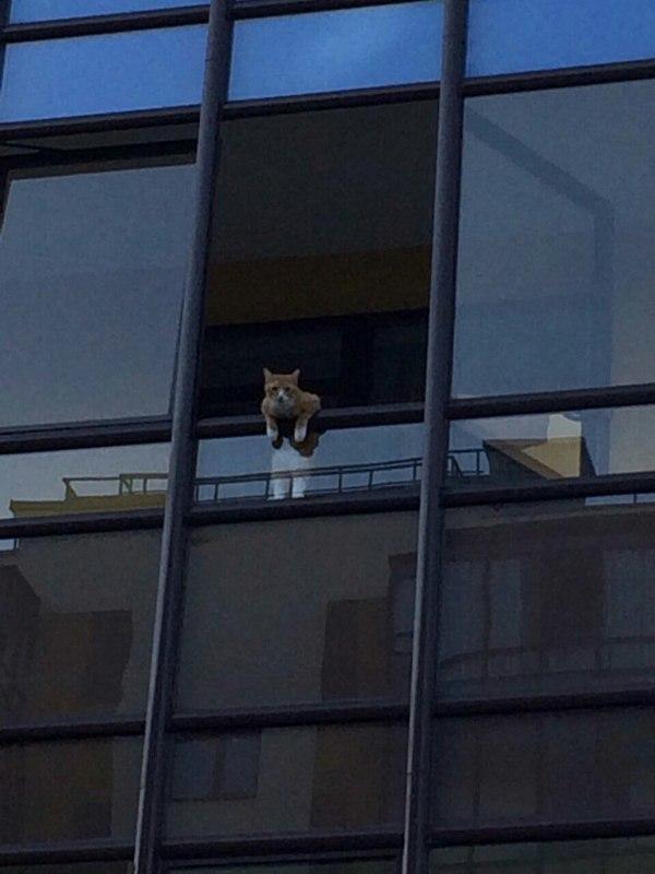Культурный котенок Мяу кот, фотография, балкон, длиннопост