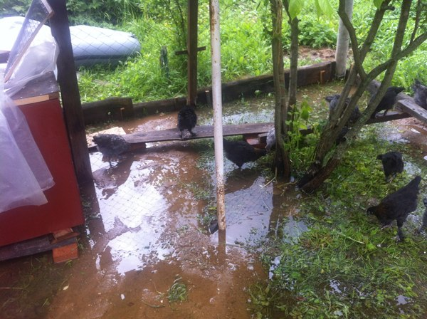 Немного о погоде в МО Курица, Хорошая погода, Потоп, Сельское хозяйство, Московская область