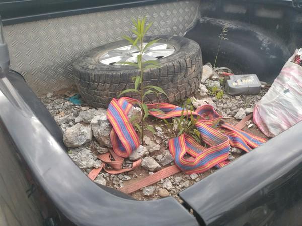 Сперва подумал что в кузове горшок с растением Пикап, Растения, Пророс, Машина, Не надо так