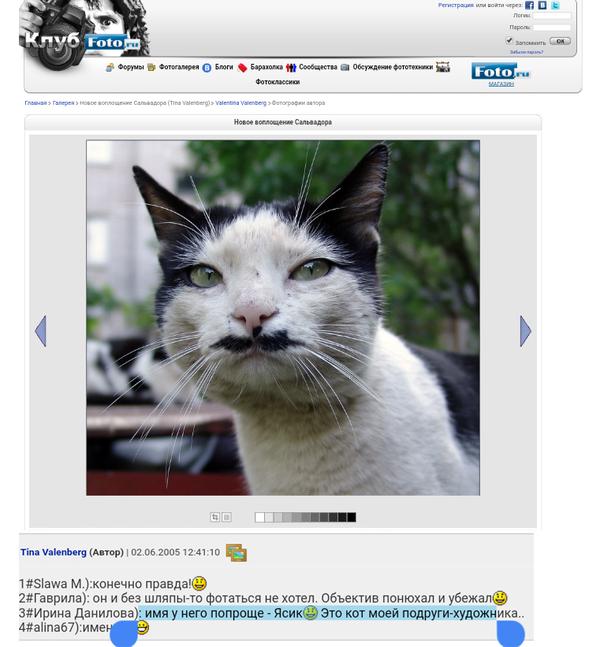 Как найти кота? Не судите строго, Первый пост, лига детективов, кот, Великий Новгород, усы, длиннопост