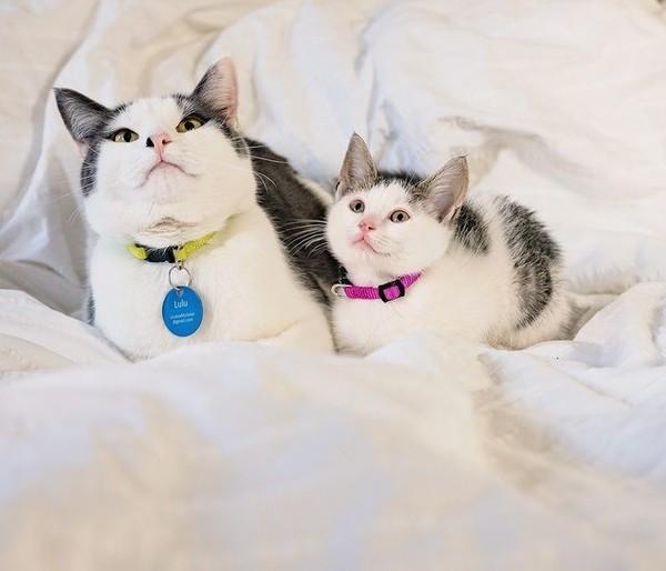 Няшные котики