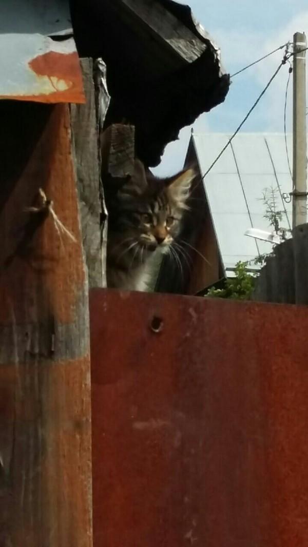 Киса ищет дом, г. Пермь. ищет дом, Пермь, кот, длиннопост