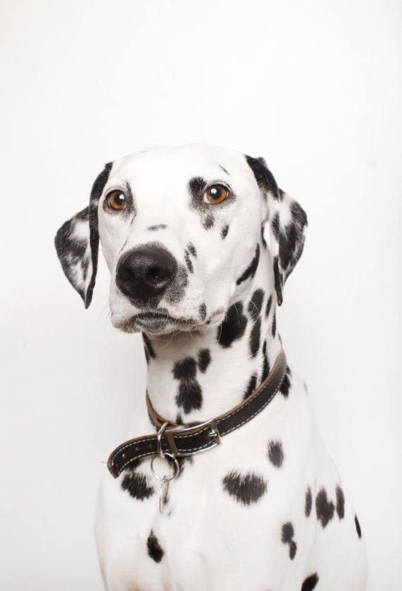Нововведения в сообществе Собака, Собачьи будни, Новости, Сообщество, Фотография, Аватарка