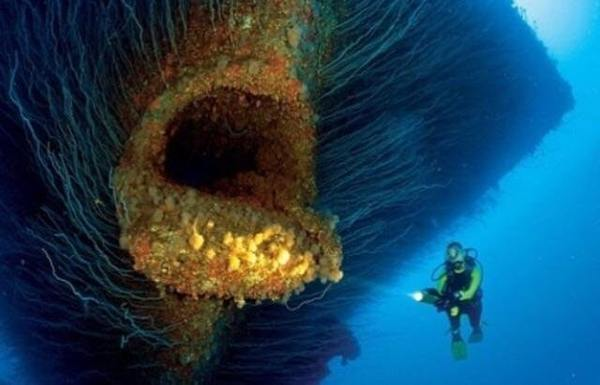Нос этого затонувшего корабля выглядит как огромная рыба