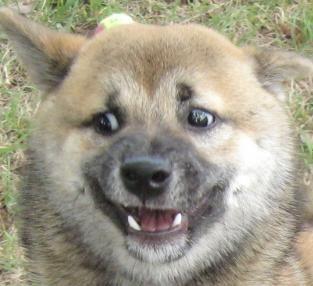 Победитель по жизни Наушники, застрял, амбушюры, собака