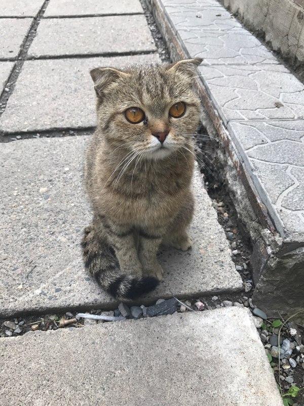 Заберите, пожалуйста, кошечку (6-7 месяцев) по адресу: г. Новокузнецк, ул. Хитарова, д. 18. Номер для связи в комментариях кот, потеряшка, отдам в хорошие руки, Новокузнецк, Лига Добра, длиннопост