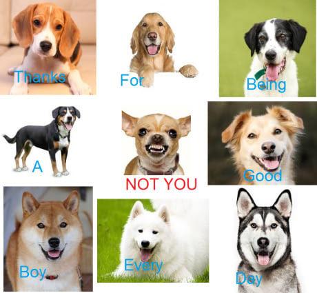 Кто хороший мальчик? Не ты ) Собака, Страх и ненависть в ошейнике, Картинки, 9gag