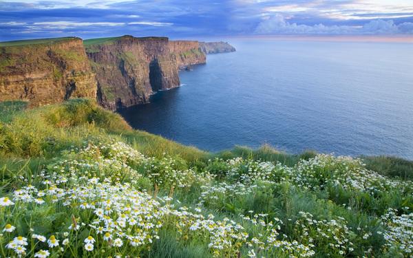 Ромашковая Ирландия.