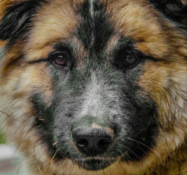 Хорошие мальчики Собака, Животные, фотография, nikon, Лига фотографов, длиннопост