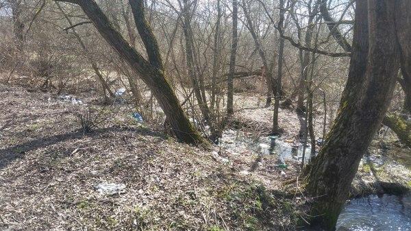 Фото ссущих в лесу фото фото 489-304