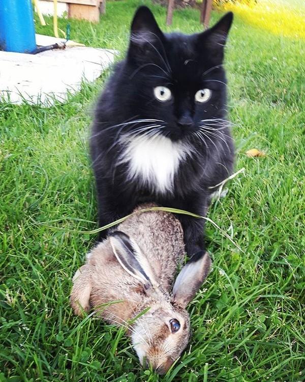Кот-охотник