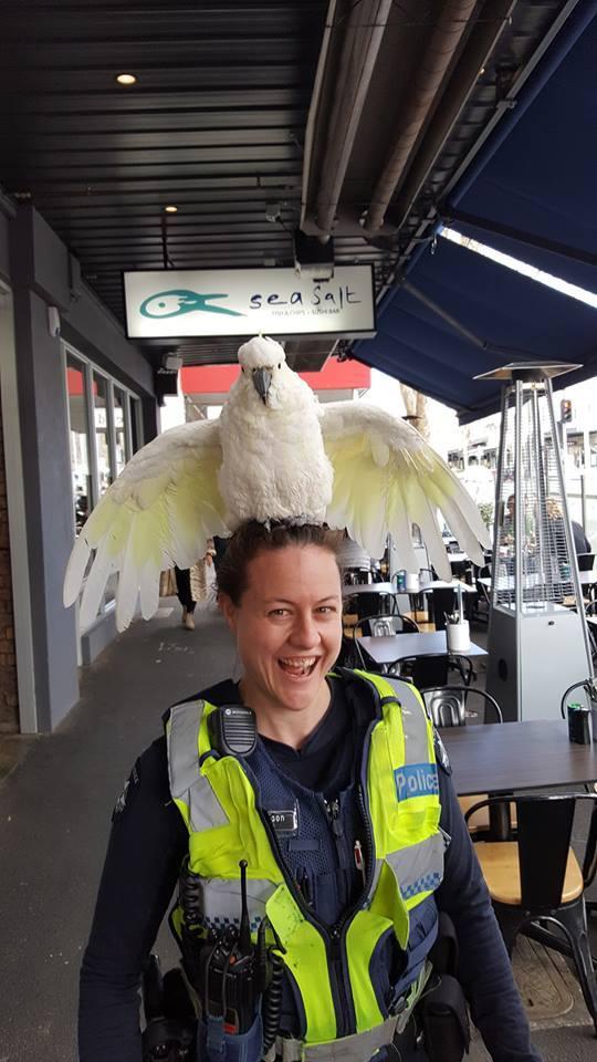 Опасная работа полицейских в Австралии